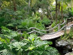 tropical garden Dreamy and Delightful Garden Bridge Inspirations Tropical Garden Design, Tropical Backyard, Tropical Landscaping, Garden Landscape Design, Tropical Plants, Tropical Gardens, Garden Pool, Water Garden, Garden Paths