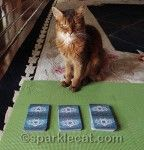 I did a Nine Lives Tarot spread for a blogging kitty pal - find out what it said: http://www.sparklecat.com/special/kitty-tarot-reading-the-nine-lives-spread
