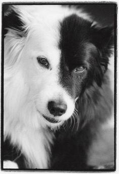 Frank Bruynbroek fez retratos preto e branco e bem convencionais de animais resgastados das ruas. COMPAWSSION é o nome da série.