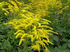 Herbs, Health, Flowers, Plants, Gardens, Magick, Health Care, Outdoor Gardens, Herb