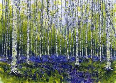 Gorgeous watercolor by UK artist Andrew Jenkin--SILVER BIRCH & BLUEBELLS - AD262
