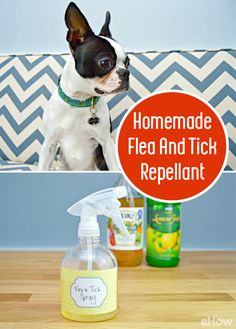 Many flea and tick repellents are full of chemicals, and are pretty harsh on animals with sensitive skin. Luckily, there is an easy home remedy that will keep your fur babies flea- and tick-free, and it can be made in minutes with a few household ingredie Dog Flea Remedies, Home Remedies For Fleas, Tick Spray For Dogs, Flea And Tick Spray, Tick Repellent For Dogs, Flea Repellant, Insect Repellent, Flea Spray For House, Homemade Flea Spray