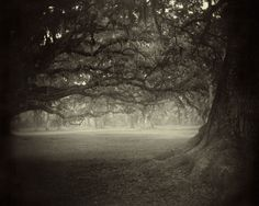 From Sally Mann's collection of southern landscapes