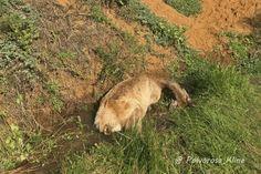 Animal Law, Animal Activist, Stop Animal Cruelty, Vegan Animals, Wildlife Conservation, Losing A Pet, Animal Welfare, Animal Rights