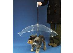 Porque a las mascotas tampoco les gusta mojarse, un práctico paraguas para perros. Foto:Archivo
