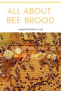 Bee Facts, Raising Bees, Backyard Beekeeping, Bee Hives, Honey Bees, Bees Knees, Queen Bees, Bee Keeping, Farms