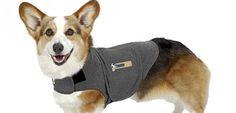 Chaquetas antiestrés para perros con ansiedad por separación - http://www.mundoperros.es/chaquetas-antiestres-perros-ansiedad-separacion/