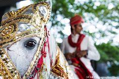 Indian Wedding Horse - STAK Photographer Duo