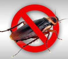Call @ 9999787571. We are providing exclusive Thursday offers on our pest control services. Uproot cockroaches from your premises with excellent and high-performing cockroach control service of Mourier pest control. Get Thursday offers with us.