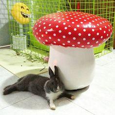 My favourite mushroom  | Happy Friday   MBR . ( smart bunny in the shade )