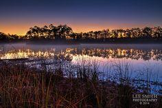 Lee Smith, Long Pine Key, Everglades, FloridaIMG_0900_1_new