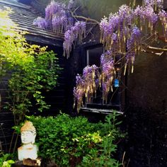 Wisteria by Marilynb Wisteria Garden, Tree Line, Flowering Vines, Lilac, Lavender, The Great Outdoors, Beautiful Gardens, Hydrangea, Natural Beauty