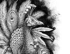 "Check out new work on my @Behance portfolio: ""AnimalBlanco y Negro"" http://be.net/gallery/33597721/AnimalBlanco-y-Negro"