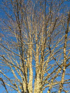 Sleepper tree
