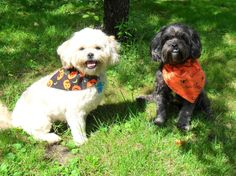 Halloween bandanas for your dog or cat. Handmade and available in ANY size. 10% of sales go to animal rescue :)