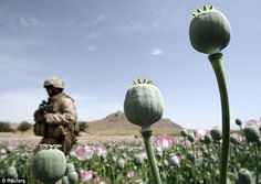 The U.S. Army says that opiate abuse has not been an extensive problem for troops in Afghanistan but Judicial Watch say the problem is more serious.    What did the Army expect with multiple deployements.cs