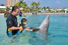 Delfines Nariz de Botella (Bahamas, 2016)