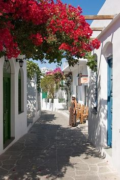 Bougainvillea. Greece