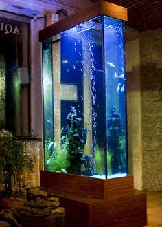 Fabrication d'aquarium colonne au design contemporain