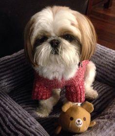 Chloe wants to play!