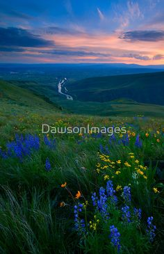 The sun sets over Selah, Washington as the Yakima River winds out of the Canyon beneath colorful wildflowers on Selah Butte. Selah, WA, USA / Taken W Canon and L II / Featured in Colour and Light / 202 Views on Yakima River, Yakima Valley, Beautiful World, Beautiful Places, Amazing Places, Beautiful Flowers, Selah Washington, Washington State, Sunset Canvas