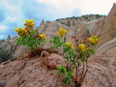 Kasha-Katuwe Tent Rocks National Monument | pinned by haw-creek.com