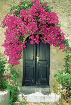 Use fast-growing evergreen vines to camouflage unsightly buildings or structures, add privacy or create shade under arbors or other garden supports. Vines may grow in three different ways: tendrils, ...