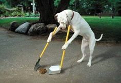 PetsLady's Pick: Funny Full Service Dog Of The Day  ... see more at PetsLady.com ... The FUN site for Animal Lovers