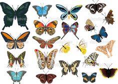 http://static6.depositphotos.com/1003722/664/v/950/depositphotos_6649190-Twenty-two-color-butterflies.jpg