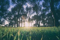 Surprisingly green Casa de Campo park Madrid [OC][2901x1934]