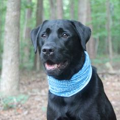 Canine Scarf L Blue by Eleanor and Milo | Fab.com