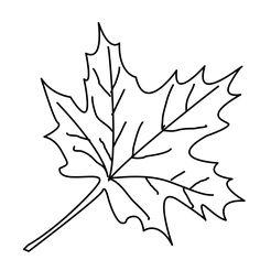 Die 8 Besten Bilder Von Blätter