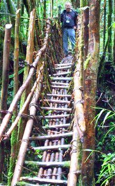 Vine bridge in Papua New Guinea highlands