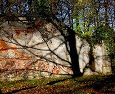 l'albero di pietra