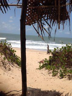 Savannah Beira Mozambique okt 2015
