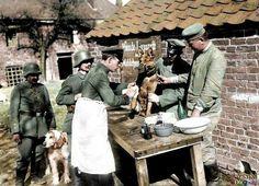 Perro en hospital alemán está siendo curado. 1915.