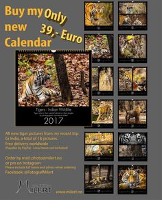 You can buy my 2017 calendar now - pm og mail: photo Tiger Pictures, Calendar 2017, India Travel, Euro, Wildlife, Photography, Stuff To Buy, Instagram, Photograph