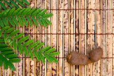 tamarindus – Vyhledávání Google Texture, Wood, Crafts, Google, Surface Finish, Manualidades, Woodwind Instrument, Timber Wood, Trees