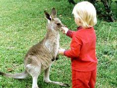 Am schönsten Ende der Welt | Mit kleinen Kindern nach Australien? Klingt ein bisschen verrückt. Ist es aber nicht - wenn man lange genug spart und vor Ort die richtigen Ziele wählt. ELTERN-Autorin Bettina Laude über Babybecken, Bio-Burger und Beuteltiere auf einem faszinierenden Kontinent.