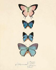 Bleu papillon art impression jardin art impression chalet mur décor victorien décoration murale Antique imprime Nature wall art papillon Home décor art