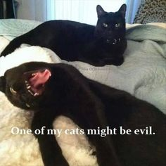 Funny Animal Pictures Of The Day - 23 Images #BlackCat