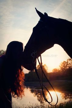 Horse silhouette photographer Laura Adams