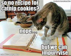 catnip cookies