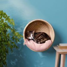 hanging cat basket with white and gray cat inside For the love of cats and kitties. cat basket with white and gray cat inside Cat Basket, Cat Room, Pet Furniture, Modern Cat Furniture, Furniture Companies, Furniture Stores, Grey Cats, Black Cats, Cat Crafts