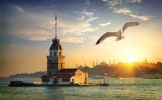 Seagull and Maiden Tower by Givaga on PhotoDune. Seagull fliying near Maiden¡¯s Tower in Istanbul at sunset, Turkey List Of Cities, Best Cities, Historical Landmarks, Historical Sites, Istanbul, Underground Cities, Hagia Sophia, World Cities, Tourist Places