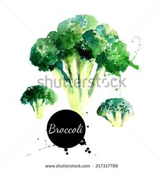 Broccoli. Hand drawn watercolor painting on white background. Vector illustration - stock vector