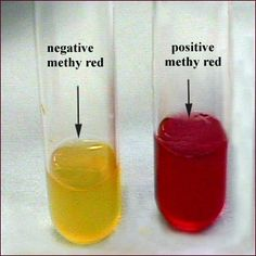 MRVP broth (methyl red test)