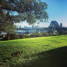 Morning walks at Observatory Hill before breakfast at Cava - perfect ! #breakfastinsydney #cavasydney #coffeeculture #observatory #observatoryhill #sydneyharbourbridge #sydneyharbour #dog #poodle by cavasydney http://ift.tt/1NRMbNv
