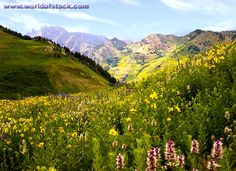 utah summer landscapes | Stock Photo titled: A High Alpine Meadow In Summer Showing A Carpet Of ...