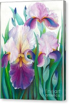 Pink Iris Canvas Print by Barbara Anna Cichocka